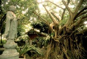 Tropics of Interest