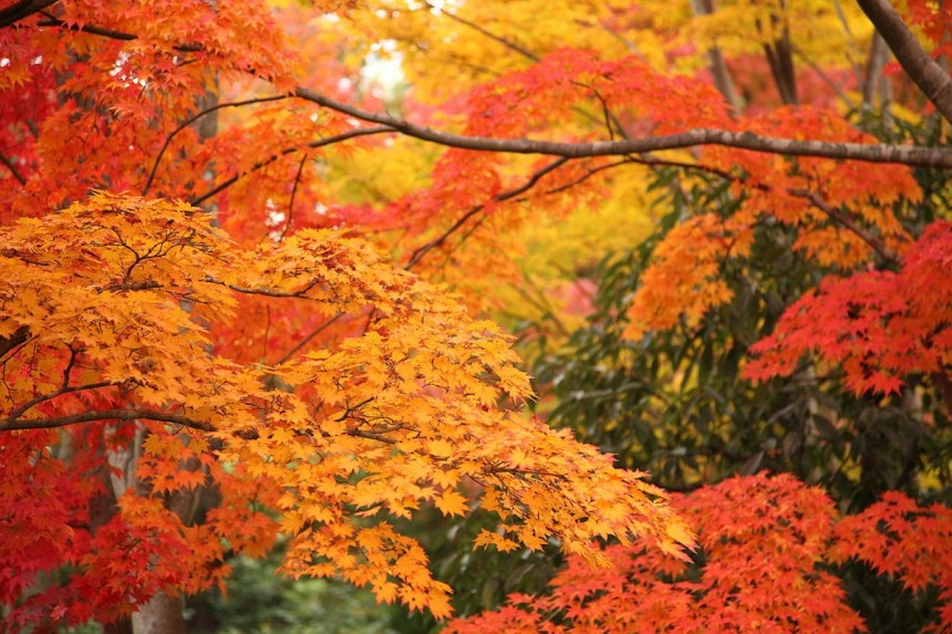 Finding Fall Colors Metropolis Magazine