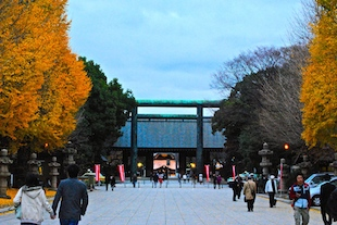 Ginko trees at Yasukuni Shrine Photo courtesy of H.A.L.