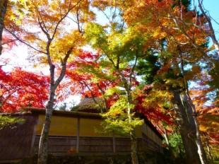 Moss garden at the Hakone Museum of Art