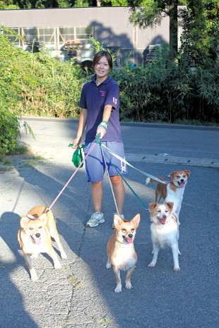 Dog walkers at AFJ
