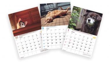 Calendar Dogs
