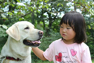 The dog Pooka comforts a disaster survivor at an APRICOT event in Iwate