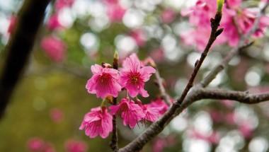 Okinawan Winter