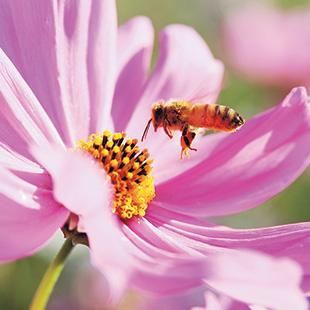Yamada Bee Farm