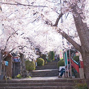 Blossom-lined steps