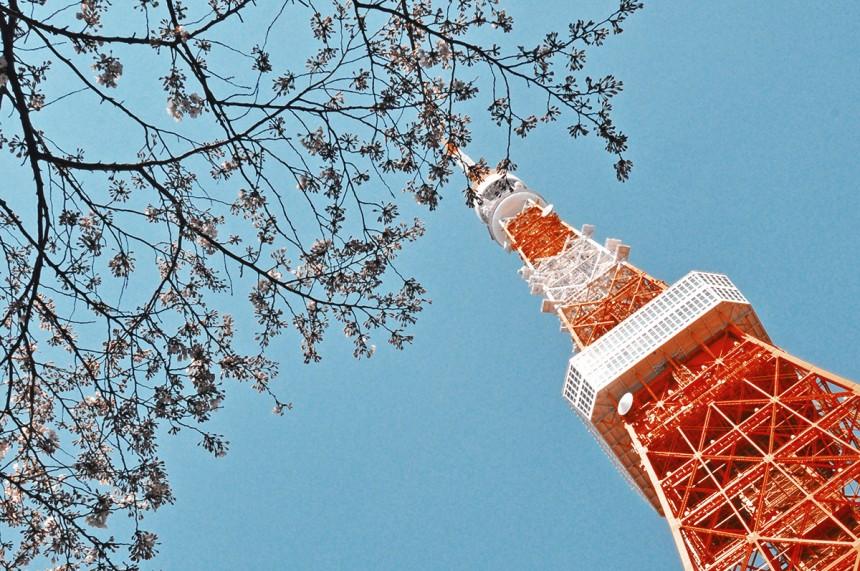 Tokyo Tower Sakura
