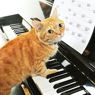 In lieu of mystery beer, here's a cat playing piano