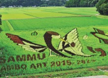 Sammu rice paddy art