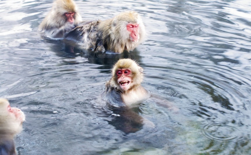Jigokudani Monkeys