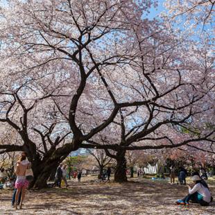 Piti Sirisriro / Shutterstock.com
