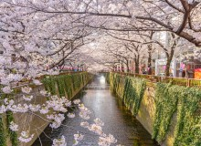 Cherry blossom lined Meguro Canal (photo by Twenty-two hours / shutterstock.com)