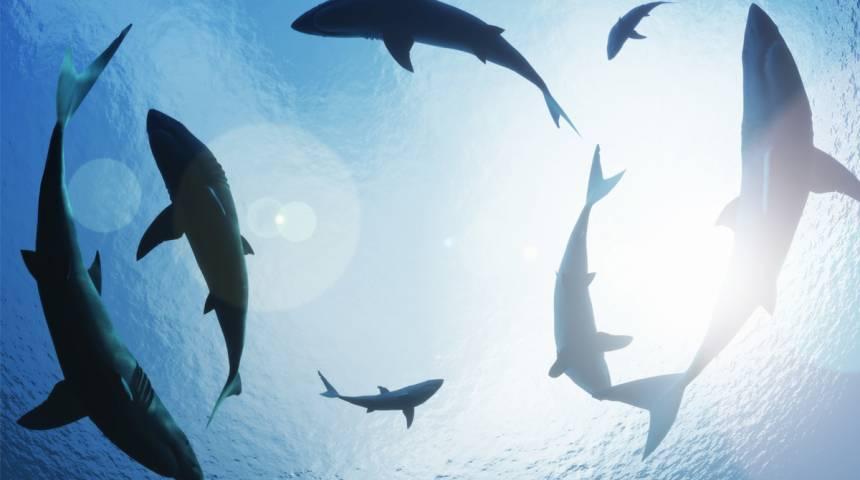 Shark Scramble