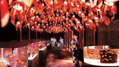 Edo Goldfish Wonderland
