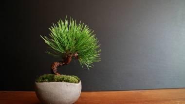 Modern Style Bonsai Class