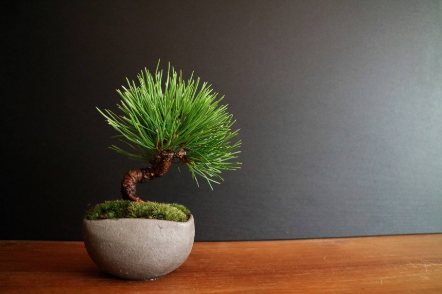 Bonsai workshop 2