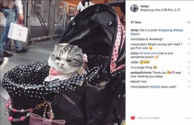 Cat-in-a-pram