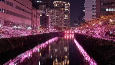 Meguro River Illumination