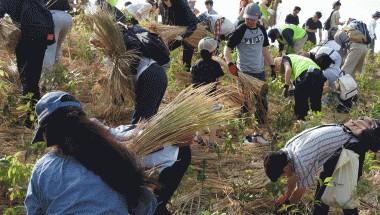 Volunteering in Japan