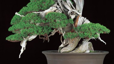 The 8th World Bonsai Convention