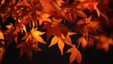 Mt. Takao Maple Festival