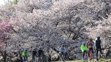 Nagano Alps Azumino Century Ride – Sakura Group (150KM, 100KM)
