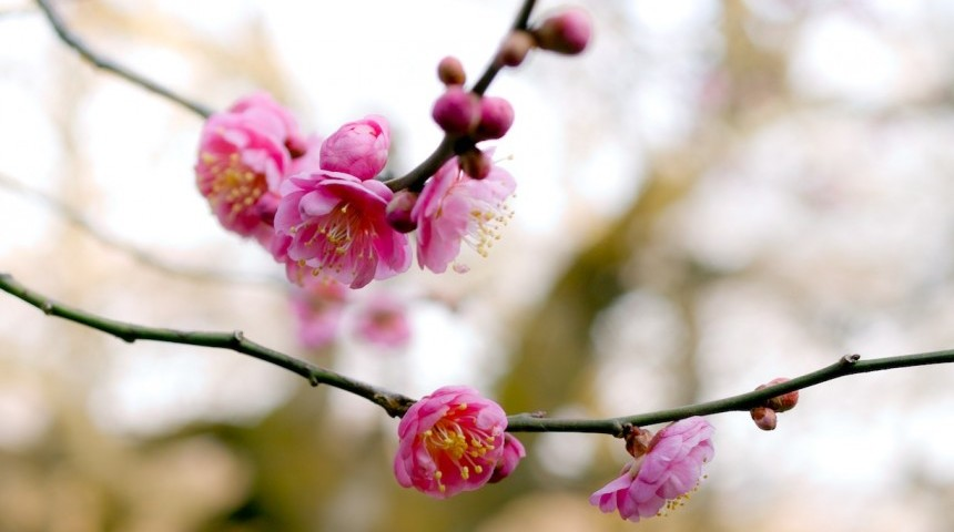 Alternatives to the Cherry Blossom Hanami