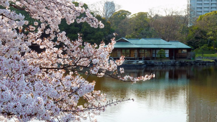 Hama Rikyu Japanese Garden Sakura Tokyo