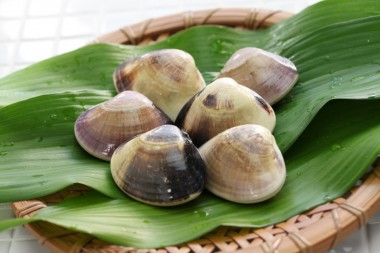 Hamaguri littleneck clams Spring Food guide Japanese cuisine shellfish seasonal