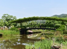 Ashikaga flower park image bridge roses green wisteria spring