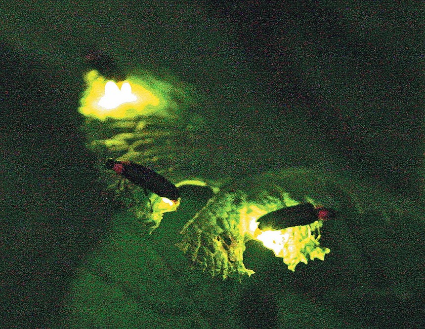 firefly festival suginami kugayama june