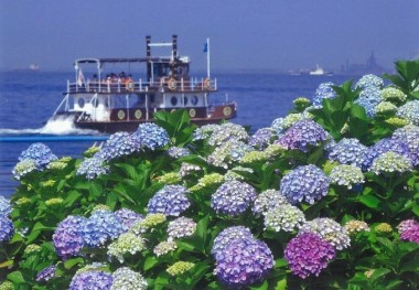 Hakkeijima Hydrangea Festival Flower Yokohama
