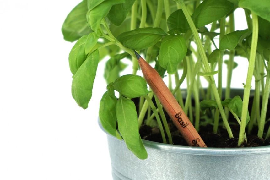 sprout pencil plant your pencil tech design july