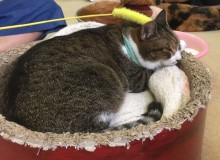 Best Tokyo Ethical Animal Cafes Cat Snakes