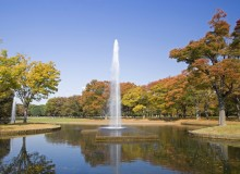 Metropolis Community Events October Yoyogi Park Fall Fundraising