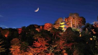 Hotel Chinzanso Autumn Garden Light-Up
