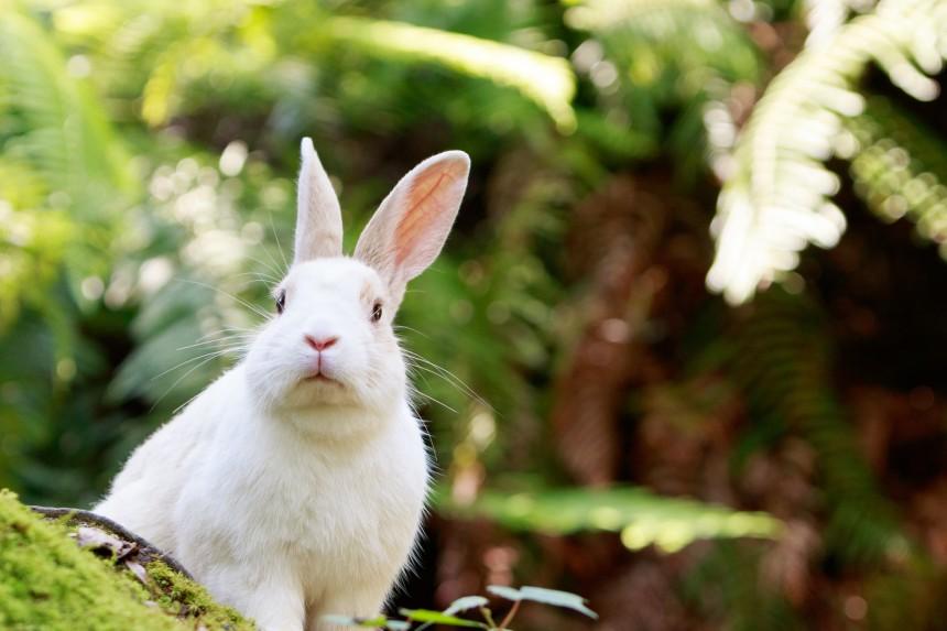 okunoshima hiroshima rabbit island