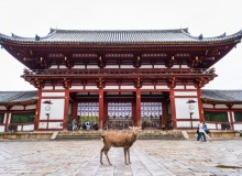 Exploring Nara, Todaiji temple
