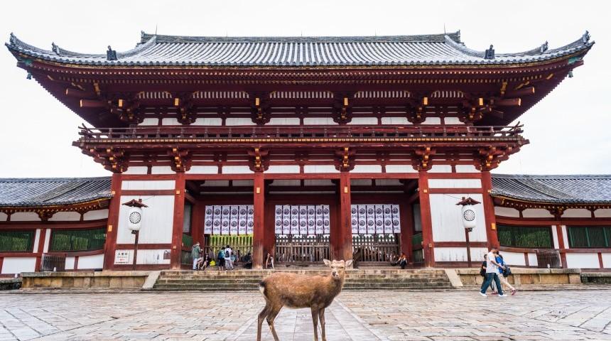 Exploring Nara