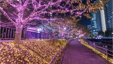 Meguro River Illuminations