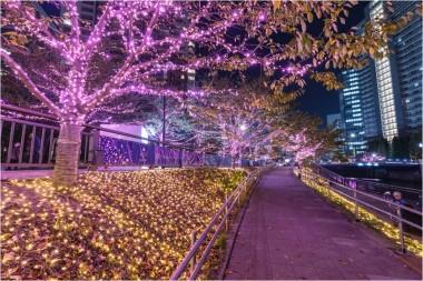 Christmas 2018 Illumination sakura Nakameguro winter pink
