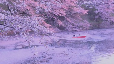 Chiyoda Cherry Blossom Festival 2019