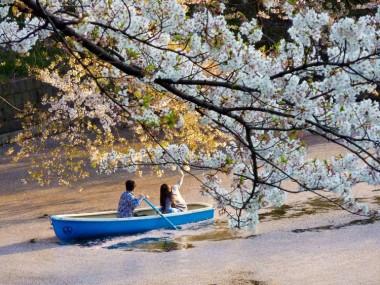Chidorigafuchi Park Sakura Hanami Spring Japan