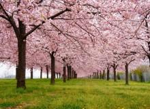 hanami hideaway Chikuma River Sakura Hanami Spring Japan