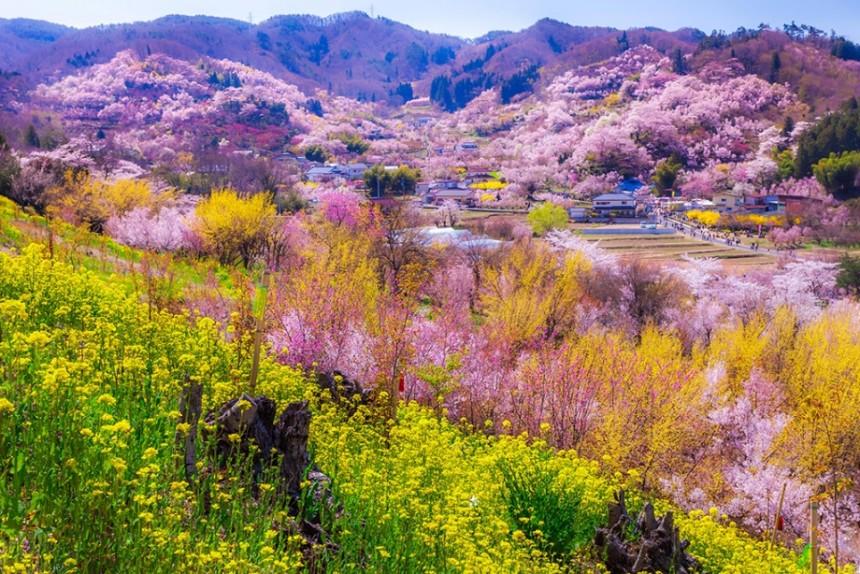 Hanamiya Park Sakura Hanami Spring Japan