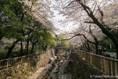 Otonashi Water Park Sakura Hanami Japan Spring