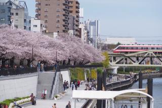 Sumida River Cherry Blossom Festival 2019
