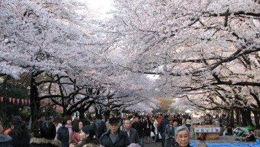 Ueno Park Cherry Blossom Viewing 2019