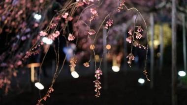 Rikugien Gardens: A Mystical Weeping Willow