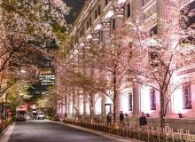 Nihombashi Sakura Festival
